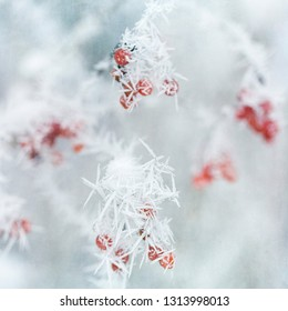Twig covered with ice crystals, closeup