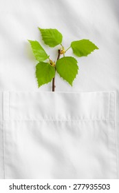 Twig with fresh leaves in shirt pocket, close up - Shutterstock ID 277935503