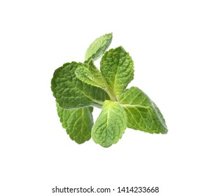 Twig of fresh mint isolated on white, top view