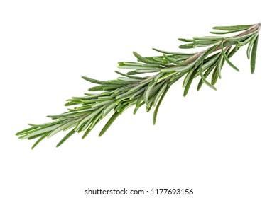 Twig of fresh rosemary on white background