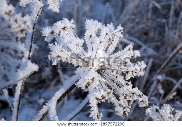 twig-frost-cover-shallow-dof-600w-189757