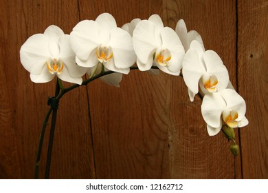 Twig full of white orchid flowers of phalaenopsis  type on wooden background