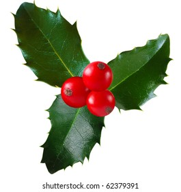 Twig of holly with berry and leaf isolated on white