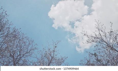 twig on blue sky background , blurred scen