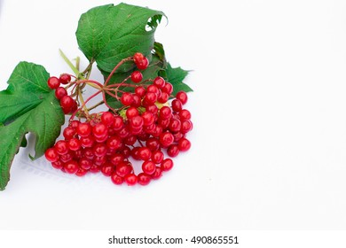 twig red viburnum, guelder rose, guelder isolated on a white background