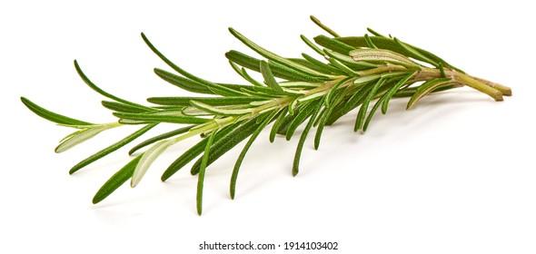 Twig of rosemary, isolated on white background.