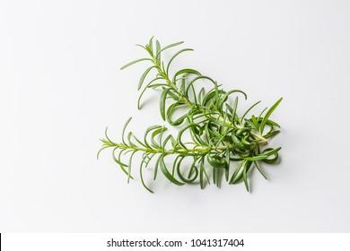 Twig of rosemary on white background.