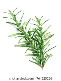Twig of rosemary on a white background.