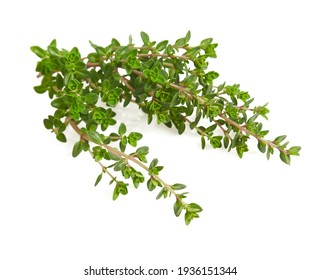 twig of thyme isolated on white background