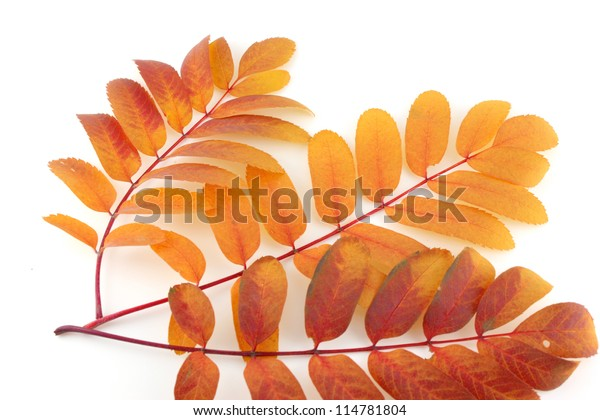 twigs-color-autumn-leaves-over-600w-1147