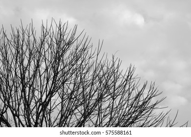 Twigs and sky Silhouette