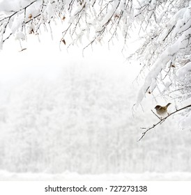 Twigs of tree covered of hoarfrost and snow on background of winter forest in snow.  There is a sparrow on one of the sprigs