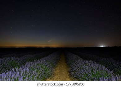 Twilight landscape in lavender field with comet C / 2020 F3 (NEOWISE)