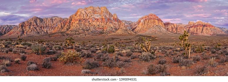 Twilight Panorama of Red Rock Canyon and Joshua Trees - Mojave Desert Las Vegas Nevada