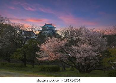 twilight scene of Nagoya Castle with Sakura foreground