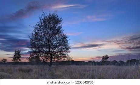 Twilight scene at a tranquil heathland, Goirle, The Netherlands