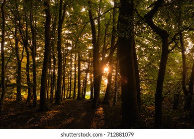 Twilight Sunset in the autumn forest