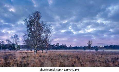 Twilight at tranquil heathland with dramatic clouds, Goirle, The Netherlands