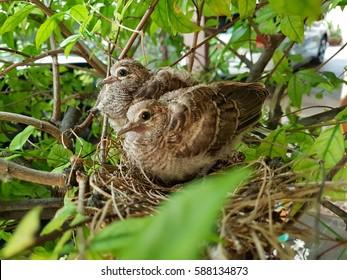 Twin baby birds in bird's nest on tree