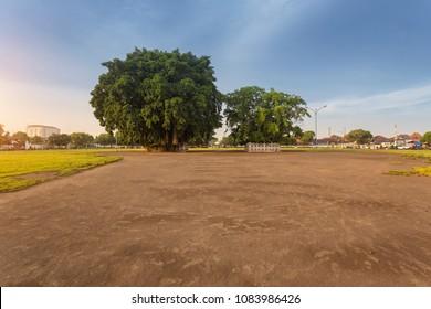 Twin Banyan Trees at South City Square of Yogyakarta