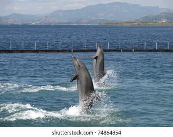 twin dolphin show in subic city, philippines