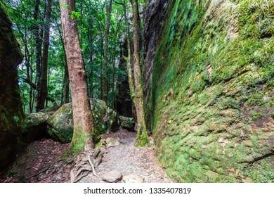 Springbrook National Park Images, Stock Photos & Vectors