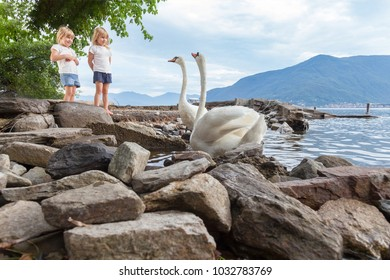 twins sisters and a swan couple watching each other on the stony beach in Italy at the Lago Maggiore