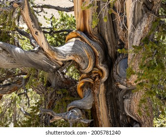 Twisted and coiled of branches