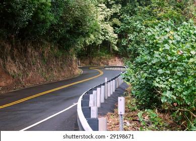 Twisted Jungle Road