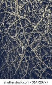 Twisted leafless vines creeper climbing on an old oak tree trunk. Monochrome, blue tinted grunge natural, organic backdrop, texture.