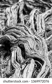 Twisted nearly dead old dry tree stem in black and white at Yardie Creek Cape Range National Park Australia