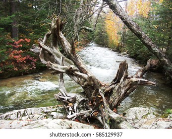 Twisted Tree Roots on Stream - Shutterstock ID 585129937