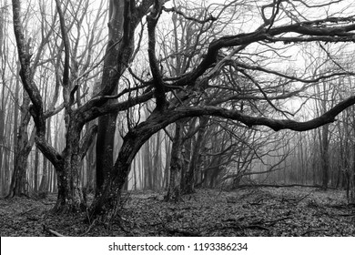 twisted trees in scary dark forest, fantasy landscape