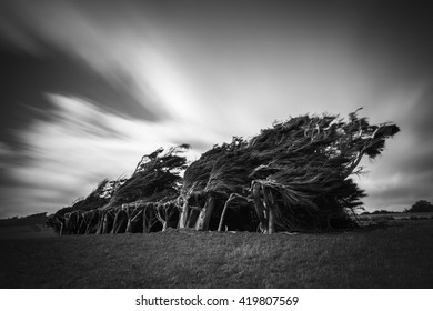 Twisted trees of Slope point