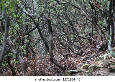 twisted woods - hiking Appalachia