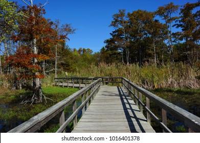 Twisting wooden boardwalk stretches into the Black Bayou Lake National Wildlife Refuge in Monroe, Louisiana.