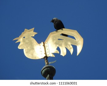 Twitter Bird atop a golden Crowing Rooster Weather Vane against a Bright Blue Sky, Rüdesheim, Germany