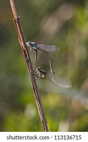 two dragonfly�´s