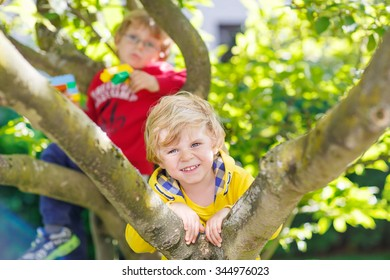 Two active little blond kid boys enjoying climbing on tree. Toddler children learning to climb, having fun in domestic garden on warm sunny day, outdoors.