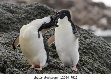 Two adelie penguins standing on beach in Antarctica