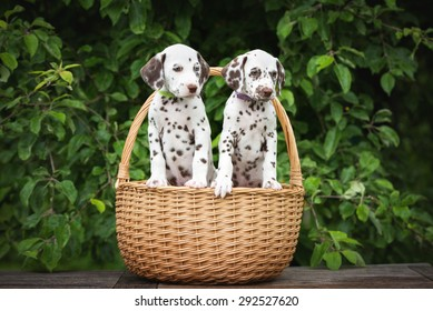 Puppies In Basket Images Stock Photos Vectors Shutterstock