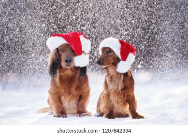 Two adorable dogs posing in falling snow wearing Santa hats
