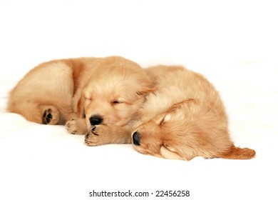 two adorable golden retriever puppies sleeping