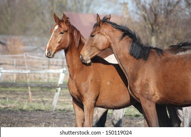 Two adorable horses nuzzling each other with affection