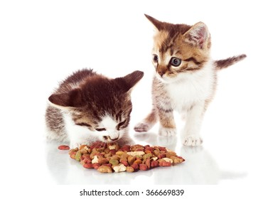 Two adorable kittens on white background