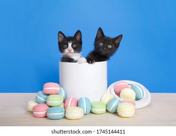Two adorable kittens peeking out of a porcelain cookie jar with macaron cookies spilled on a light wood table in front of them. Bright blue background with copy space.