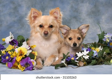 two adorable little dogs with flowers