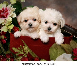 Two adorable little puppies in hatbox with flowers