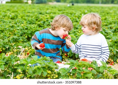 Two adorable little sibling kid boys having fun on strawberry farm in summer. Children eating healthy organic food, fresh berries. Happy toddlers.