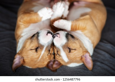 two adorable puppies sleeping nose to nose